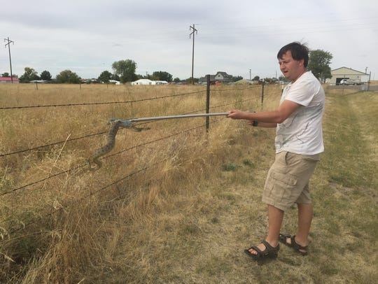 Jeremy Allestad of Montana Reptile Rescue releases
