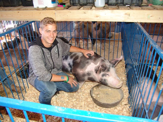 Bryce Duncan, 16, of Warsaw and a member of the Ridgerunners 4-H club, use to show steers, but had always helped his brother Evan prepare for his hogs for the show. This is the second year to participate in the hog show.