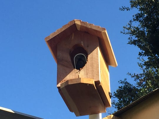 A citizen's camera installed inside a birdhouse.