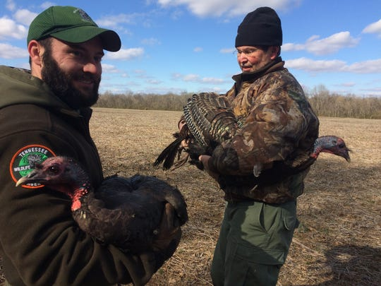 Maury County Wildlife Officer Rusty Thompson, left, and Yanahli WMA Manager Tommy Edwards hold turkeys during the tagging process.