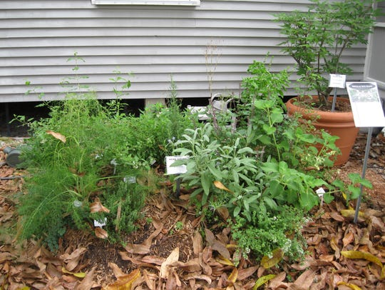 Herbs are also fun to grow and can be mixed in with