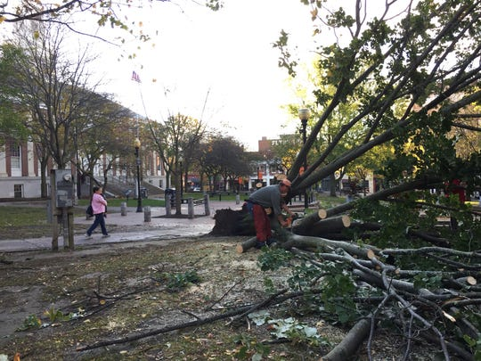 A tree downed by wind is trimmed for removal in Burlington City Hall Park on Oct. 30, 2017. The same windstorm severely damaged two Norway maples in front of the Chittenden County Courthouse on Main Street.