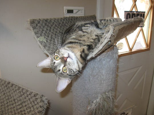 Upside-down, right-side-up, no matter -- there are always cats hanging around Cat's Meow, just waiting for you.