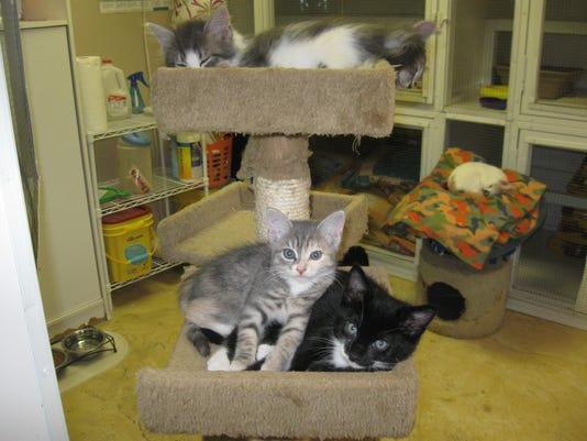 0131-YNIR-CM-kittens.jpg