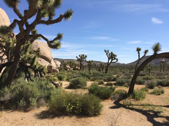 More than 2.8 million people visited Joshua Tree National