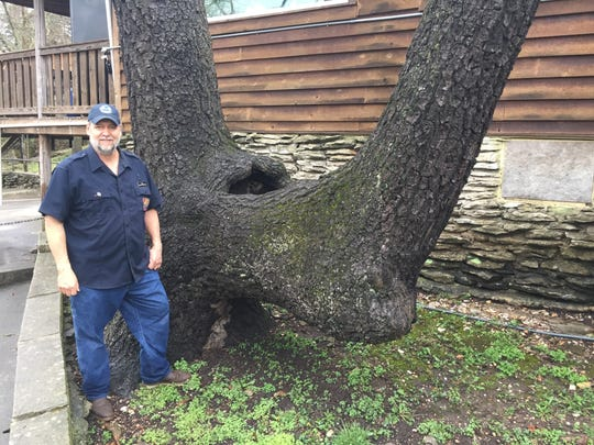 Smallin Civil War Cave owner Kevin Bright says this marker tree was likely made by Osage Indians more than 200 years ago.