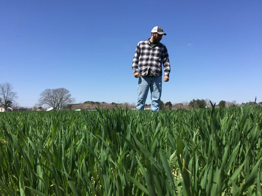 shane king wheat