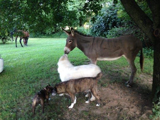 Vickie Freas, a Realtor with LCT Team – Parks, has her current home, a scenic 15-acre mini farm in College Grove with a plethora of animals, listed for sale.