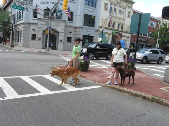 Blindfolded Seeing Eye handlers with their dogs walk