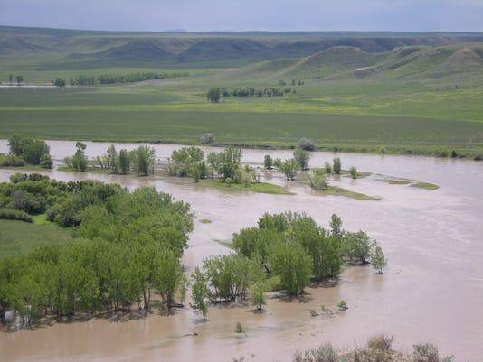 Missouri River cottonwoods