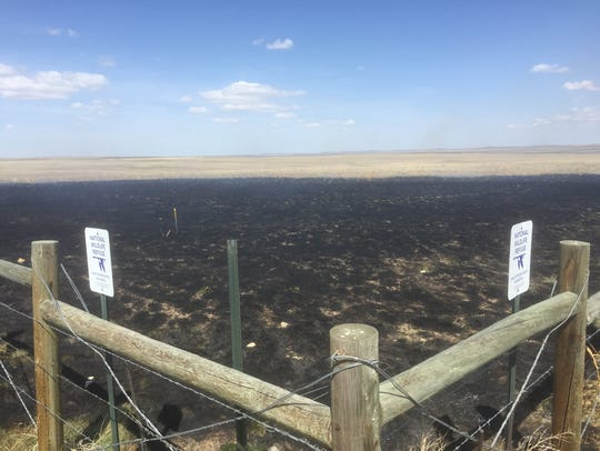 Stimulating regrowth is the aim of prescribed fire
