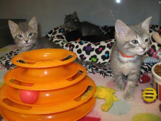 0516-ynir-cm-kittens.jpg