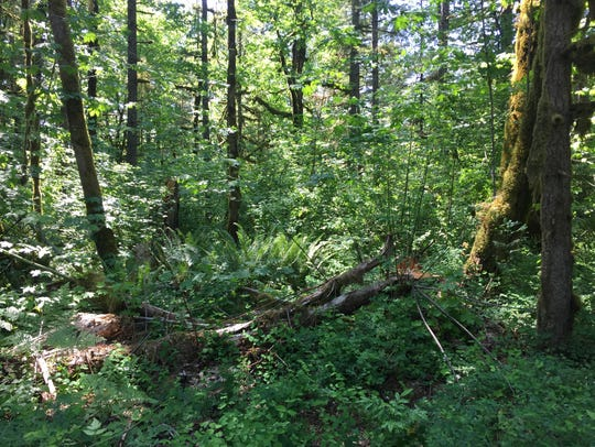 Some of the trees felled at Fishermen's Bend Campground