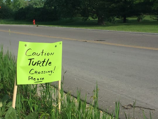 A sign denotes a turtle crossing area on Nemco Way