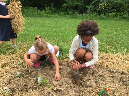 Sixth grader Haley Laughlin and first grader Lilly Wiley work to plant milkweed as part of the Monarch Way Station being established at Bishop Flaget School in late May.