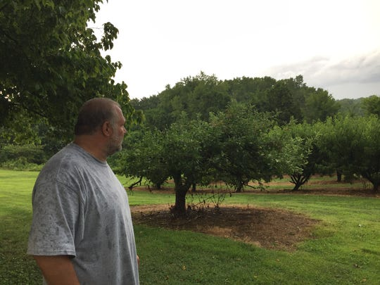 Co-owner Andrew Dorfman looks at some of the trees