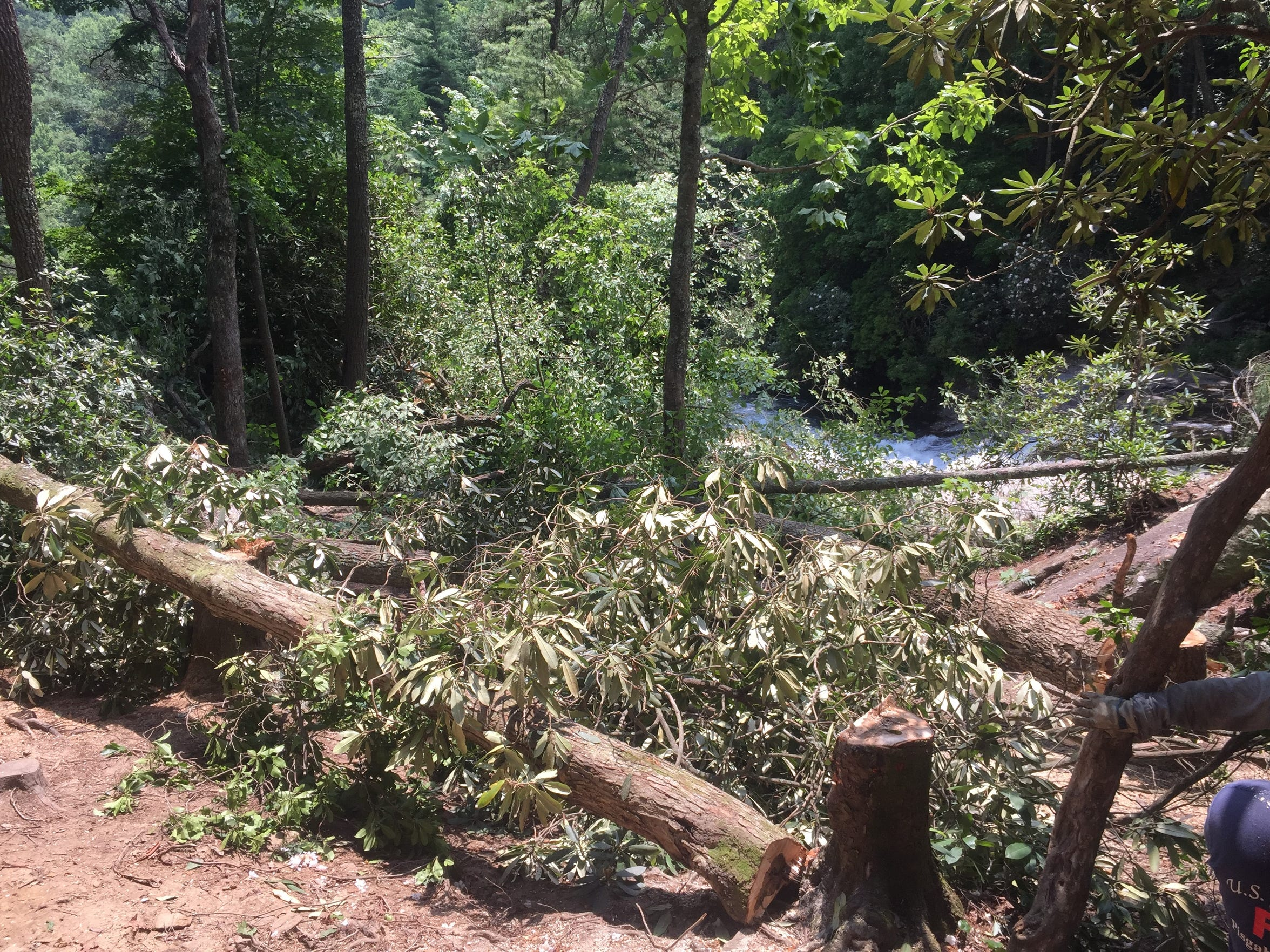 On July 11, one week after a teenage girlÕs death at Rainbow Falls, the US Forest Service went to work on the trail felling several dead or dying trees across an inviting opening at the top of Rainbow falls to deter people from entering.