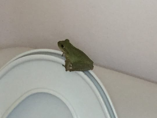 Above the rim. A tree frog on a toilet really isn't