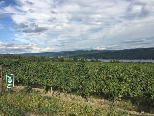The vineyard at Dr. Konstantin Frank Winery rises above Keuka Lake.