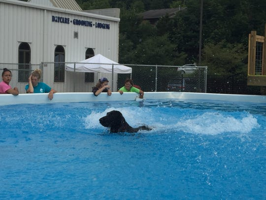 Get ready for the splash after dogs of all sizes, shapes