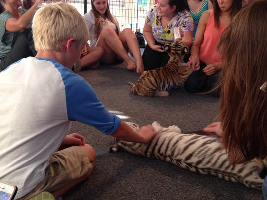 About 30 people visited Wildlife in Need in Charlestown, Ind., during a summer fundraiser event called Tiger Baby Playtime. Visitors paid $25 to pet and play with two baby tigers.