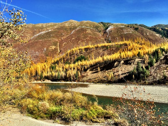 Western larch glow golden along the North Fork of the
