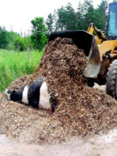 Livestock farmers and ag professionals can attend a program on best practices for successful on-farm composting of animal mortalities on June 28 in Hixton.