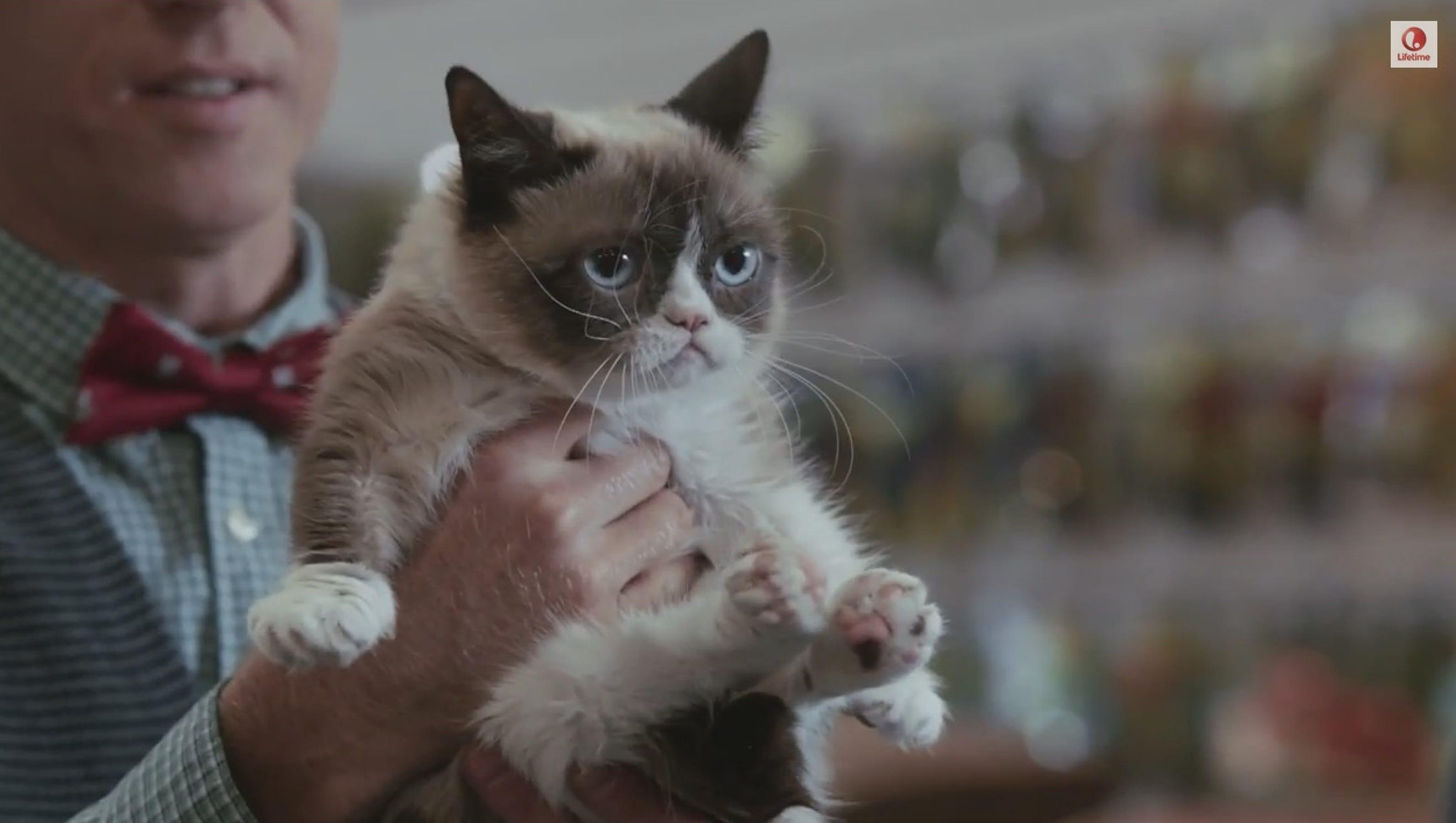 Фото сердитый кот звезда интернета 5