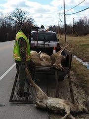 Justin Kremsreiter of Shawn's Deer Service gets ready to load a vehicle-killed deer onto a trailer during roadkill pickup in April 2017 in the town of Delafield.