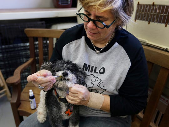 Lynne Tingle administers a cannabis based medicinal treatment to a dog at the Milo Foundation pet adoption center in Richmond, Calif., on Feb. 14, 2017.