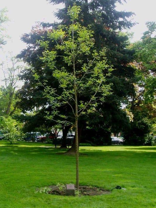 SAL0815-RL tree watering