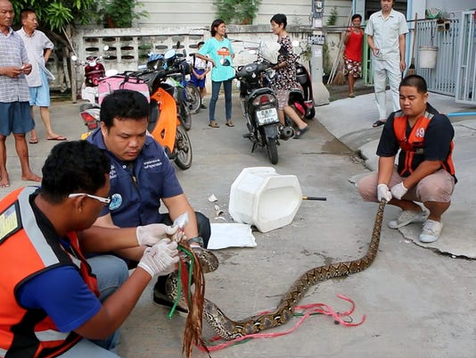 Thailand Snake Ordeal