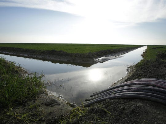 FILE - In this Feb. 25, 2016 file photo, water flows through an irrigation canal to crops near Lemoore, Calif. The Trump administration says it will look at ramping up water deliveries to farmers from California's massive and environmentally sensitive Central Valley Project. (AP Photo/Rich Pedroncelli, File)