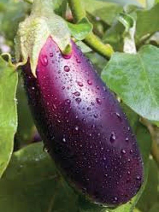 Hanging Eggplant (1).jpg