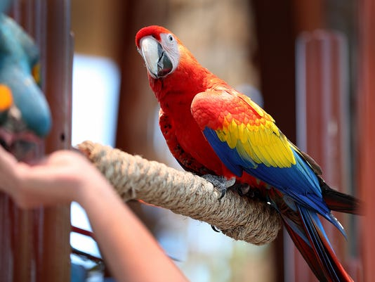 636325333816426535-Macaws-mk-03.jpg