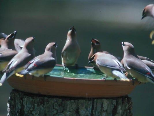Water for birdsjpg