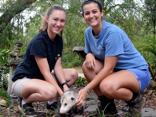 St. Francis Wildlife volunteers Shelby Boykin and Tori Bakley with Pepé Opossum.