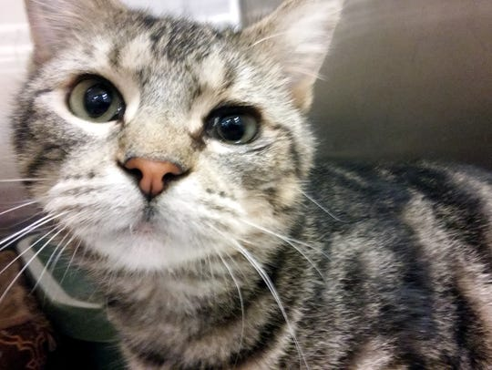 Timothy is a beautiful, 1-year-old, neutered-male domestic