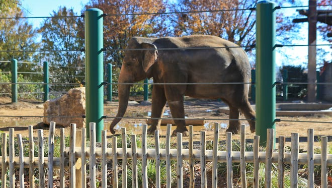 The elephant exhibit at the Louisville Zoo features a larger space as well as a new entrance.