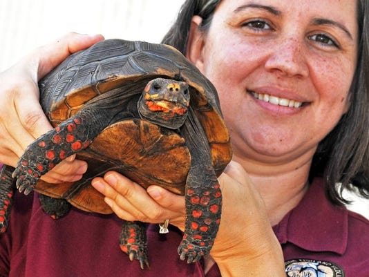 635640727367145793-1396558699007-Exotic-Pet-Amnesty-Day-preview-8