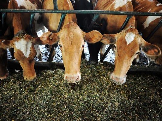 635799123334076453-cows