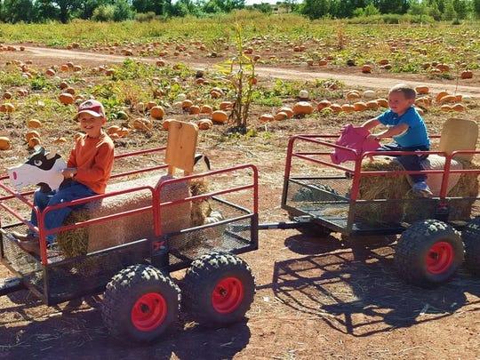Willis Farm Fall Festival and Corn Maze