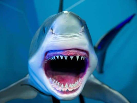 Through 5/29: 'Planet Shark: Predator or Prey'
