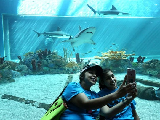 Visitors often can't help but take a selfie with the