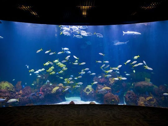 One of the many saltwater aquariums at the new Wonders of Wildlife National Museum and Aquarium, now slated to open on Sept. 21.