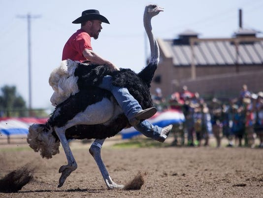 3/9-3/11: Chandler Ostrich Festival