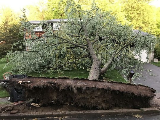 A tree is uprooted by Tuesday's storm on the corner