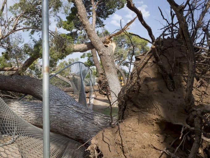Árbol caído en la Escuela Primaria Palo Verde, 8 de