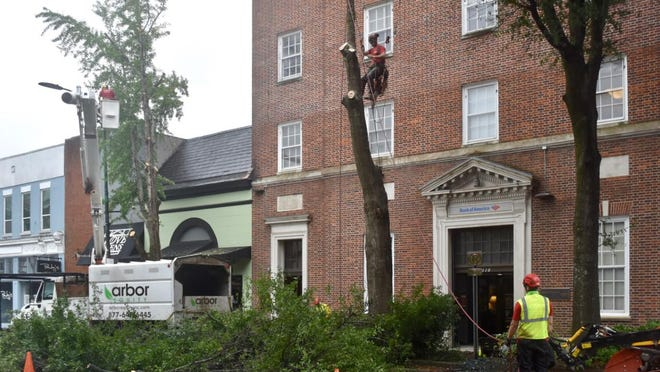 Workers begin taking down trees Tuesday on the eastern stretch of Clayton Street as a downtown Athens streetscape project continues.