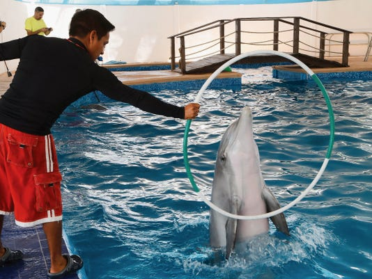 Trainer Alfonso Tellez works with Isis, one of two bottlenose dolphins who are now housed at Anita Nueva Aventura, an aquatic and amusement park in Juárez.